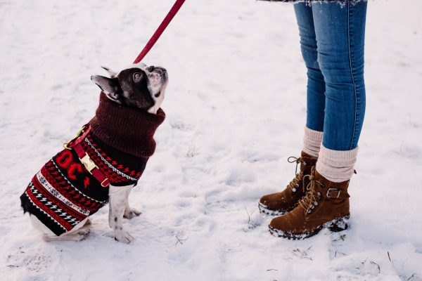 Take The Doggy For a Walk- one of the easiest pet business ideas