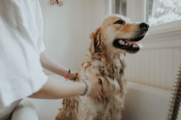 offer pet massage services - an investment free business to start